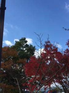 さるびの紅葉